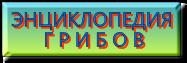 ЭНЦИКЛОПЕДИЯ  Г Р И Б О В